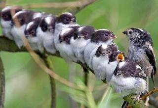 A whole row of tits