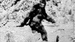 vintage bigfoot photo