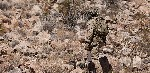 crye new multicam patterns