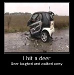 I hit a deer in my SMART car